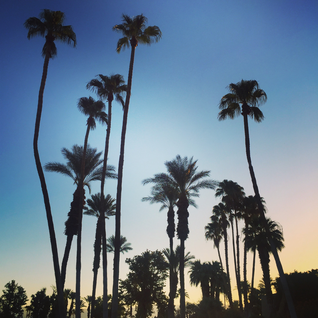 """""""Sunrise over Palm Springs!"""" - Kate Peterson, Director of Client Services"""